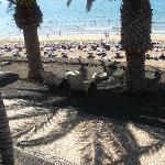 beach bar in puerto del carmen