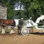 Driver prepping the horse for the carriage ride