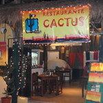 Cactus의 사진