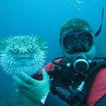Cachi posing with Porcupine Puffer Fish