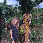 The banana field across the road