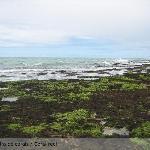 Barreira de corais