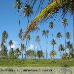 Cenário coqueiros e praia