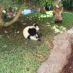 en la isla de los lemures.