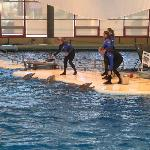 Dolphin show in progress