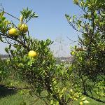 Nearbye Orchard