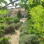 superbe jardin  un melange  de fruits  et de fleurs