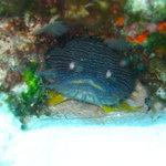 diving with palancar