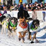 Start of the Iditarod Trail Sled Dog Race, photo by Rebecca Coolidge/ACVB