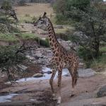 we also saw a baby giraffe that was only a few weeks old!