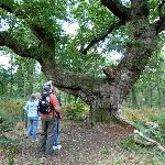 Saddle Oak 1
