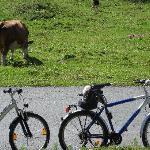 The bikes en route