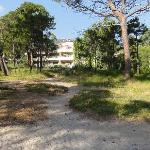 The path in the pine forrest between the beach and the hotel