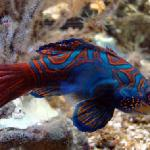 A colourful fish