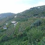 The terraces & vineyards