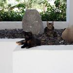 Cats, lounging by the pool