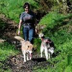 Enjoying a Husky Hike!