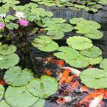Koi ponds on hotel property.