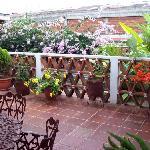 Beautiful flowers on the back terrace