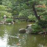 Koi in pond with small bridge in background