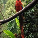 Papagei im Garten