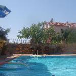 Poppy's pool