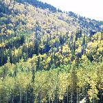 fall colors shown on the ski slopes