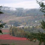 Blueberry fields in the valley below in Autumn