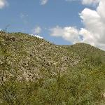 Lots of cactus on the way to Carlsbad Caverns