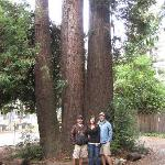 Redwood just outside townhome