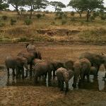 Elephants du Tarangire
