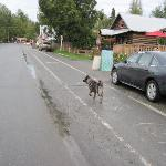 The Wandering Dogs of Talkeetna