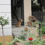 """""""Cucciolo"""" at home"""