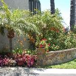 Best Western Newport Mesa Inn plants