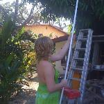 mi hija getting mangos from tree in yard of Casa Coba
