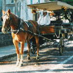 Take a carriage ride!