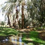 温泉が湧いていてヤシの林に流れています