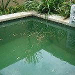piscine individuelle sale