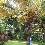 Jamaica's Tropical Paradise