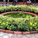 Pension's garden