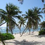 Bodden Town Beach Scene East of Turtle Nest Inn