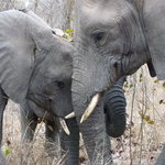 Elephant and Mom