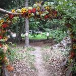 Walkway to wedding in woods