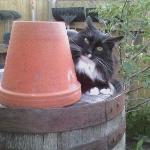 Fearsome protector of garden