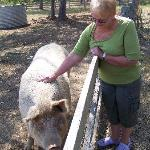 Making friends with Salami the Lucky Pig