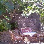 Under the fig tree