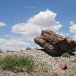 Versteinerter Baumstamm