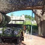 cheetah exhibit