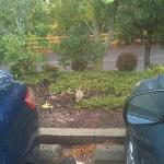 Little rabbit friend in the parking lot