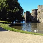 Castle walls & moat with swans
